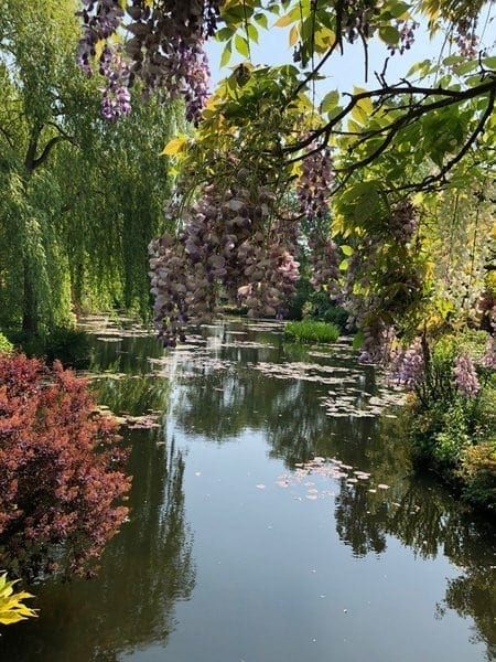 french-art-school-may-tour-2018-monets-garden-pond-and-wisteria
